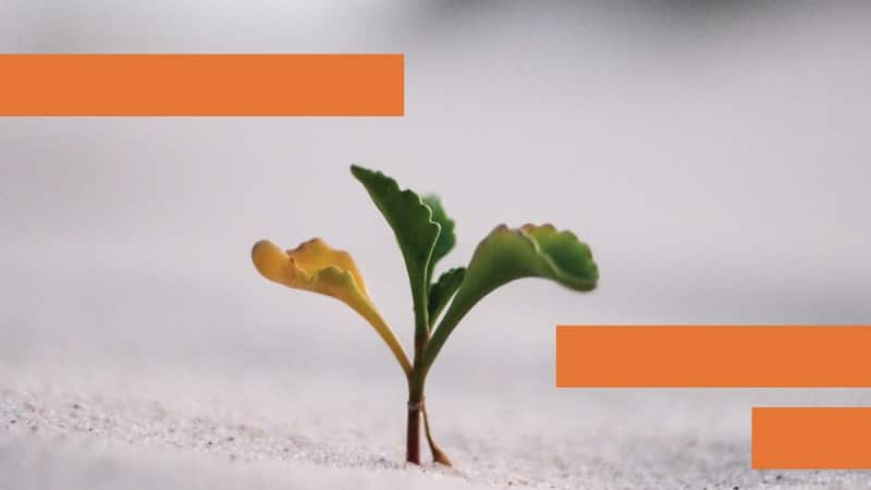 What Is Sustainable Marketing And Why Is It So Important?